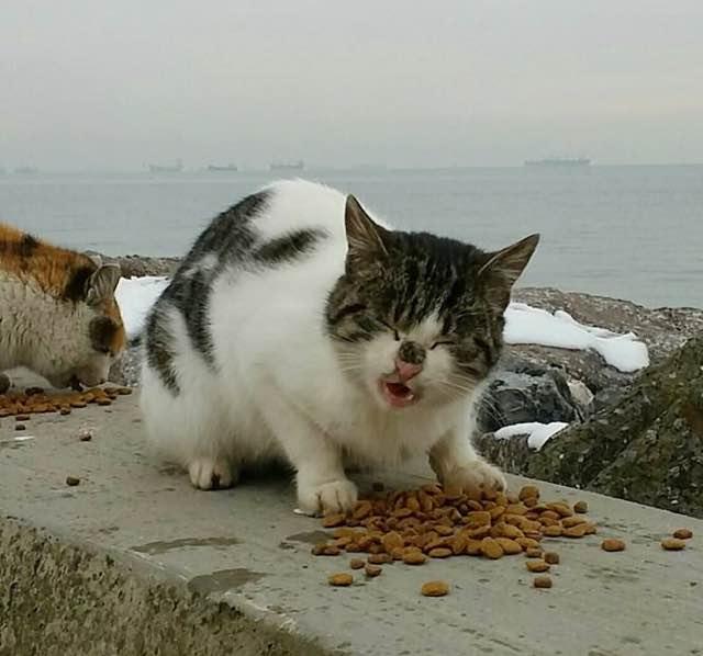 美味しそうにカリカリを食べる猫