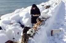 大雪の中猫にエサをあげる女性