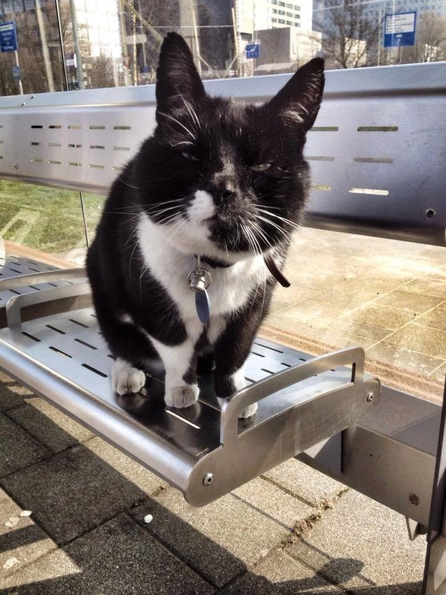 駅に座って待つ猫