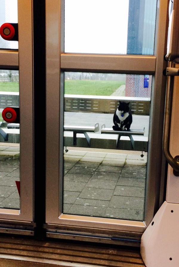 電車の中から撮影した猫