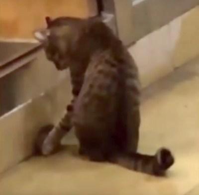 ネズミを元気づける猫