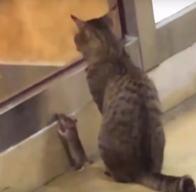 いっしょに待つ猫とネズミ