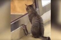猫とネズミがいっしょに待つ