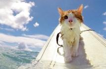 サーフィンをする片目の猫