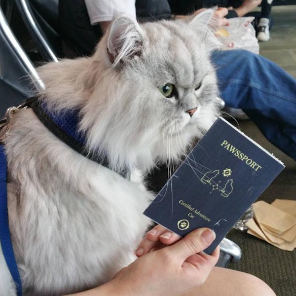 猫のパスポート