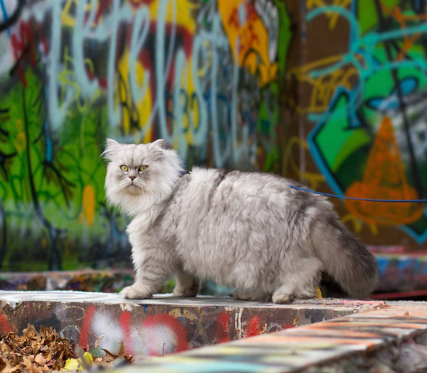 世界中を旅する猫