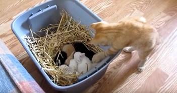 ウサギを触る子猫