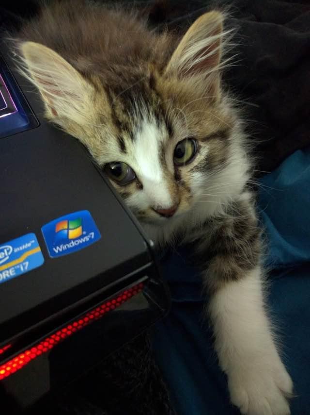 パソコンから覗く子猫