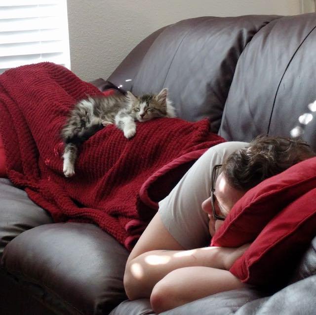 飼い主さんと一緒に眠る子猫