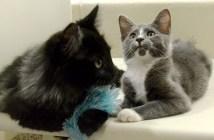 目の見えない猫と友達になった猫