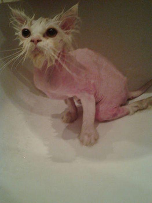 風呂に入れてもらう猫