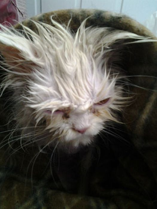 お風呂から上がった猫