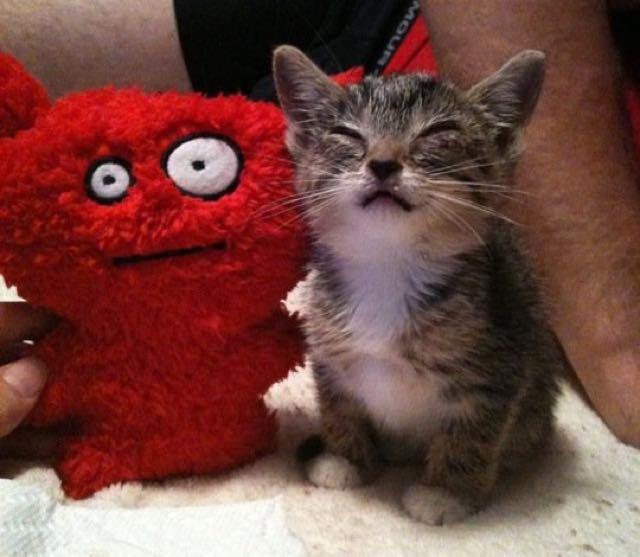 ぬいぐるみといっしょの猫