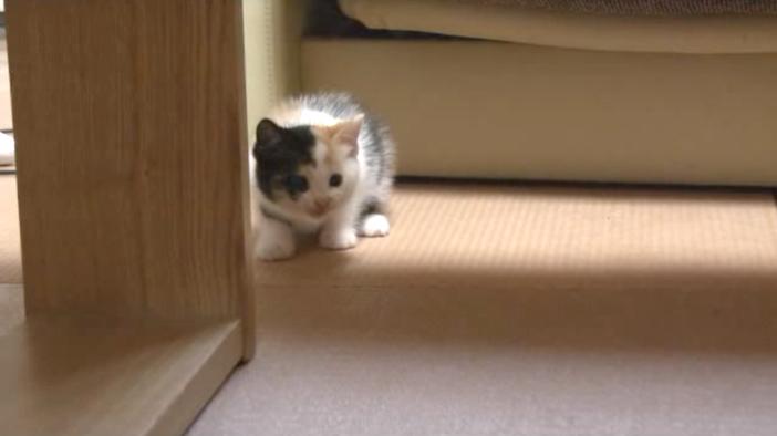近づこうとしない子猫