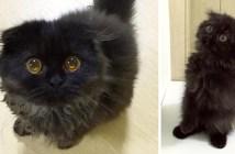 宝石のような瞳を持つ子猫
