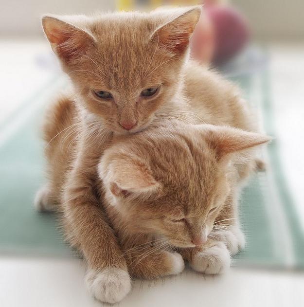 後ろから抱きしめる子猫