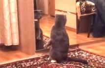 鏡に映る自分に驚きの反応をする猫