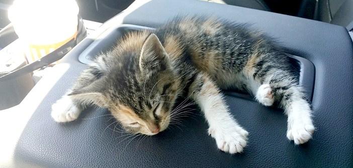 道路の真ん中で見つけた子猫