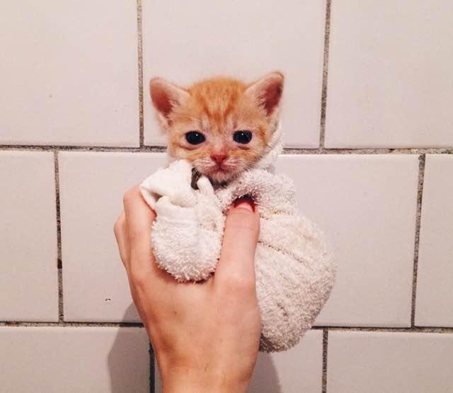 まだ幼い子猫