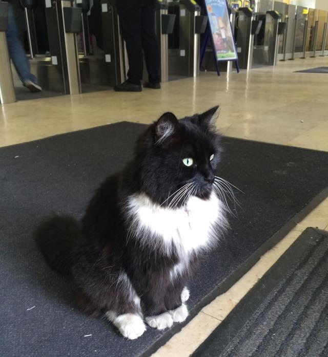 おとなしく待つ駅猫