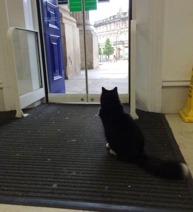 ドアの前の駅猫