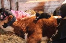 牛と大親友の猫