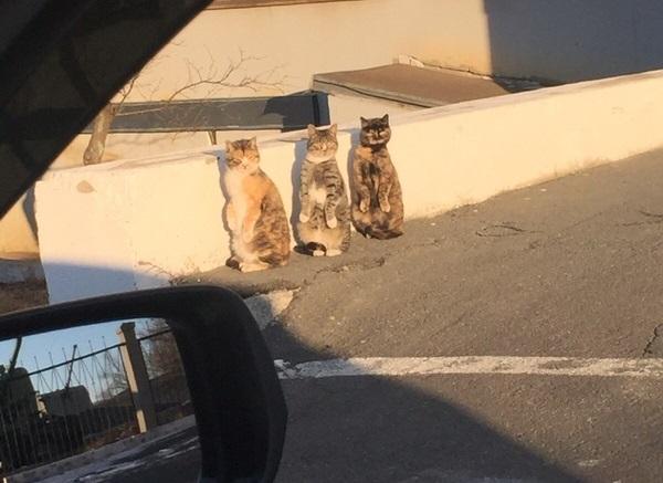 振り返る3匹の猫