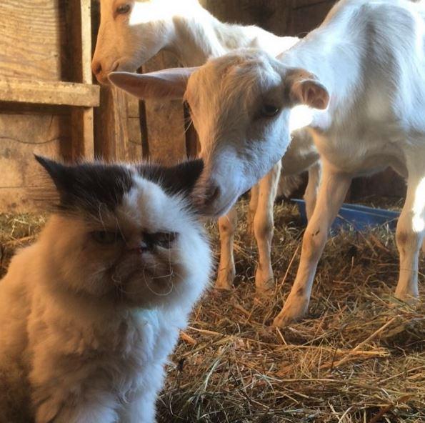 牧場で暮らす猫