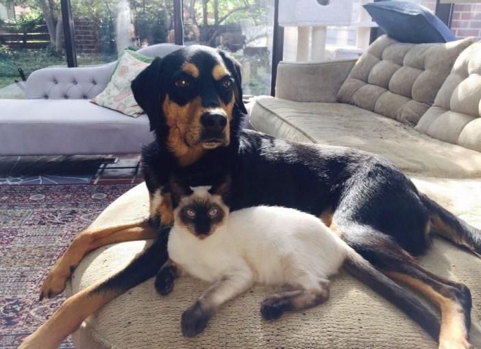 いっしょにくつろぐ犬と子猫