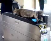 改札の上で猫が気持ち良さそうに眠ってる! そんな猫に対する乗客の対応が100点満点だった (*´ω`*)♪