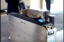 改札口でくつろぐ猫