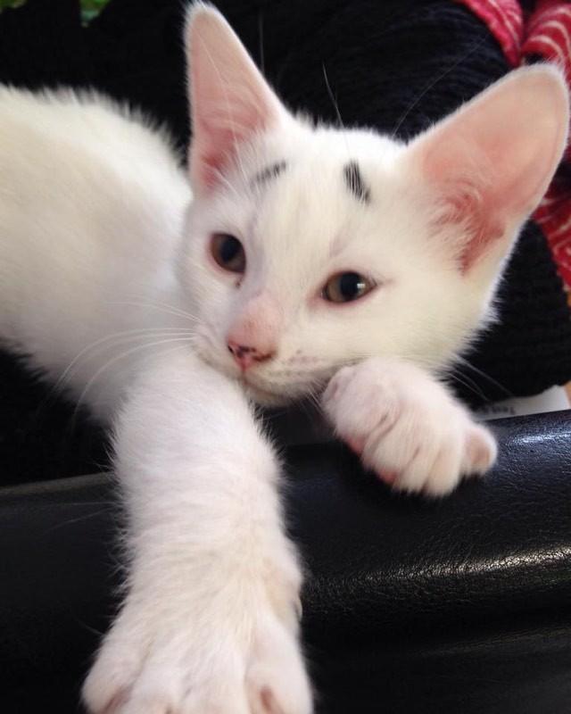 まったりする困り顔の猫
