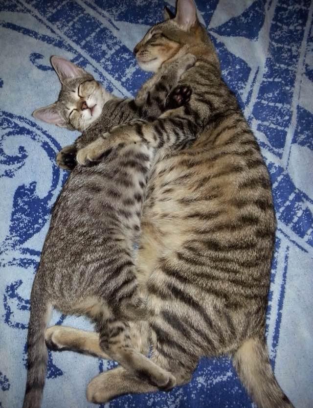 抱き合う猫と子猫