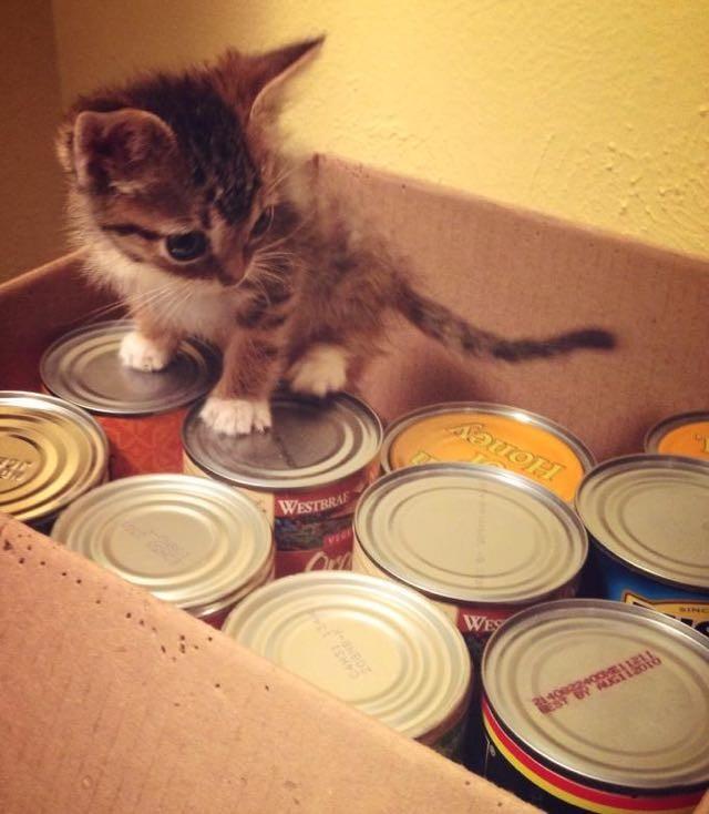 缶詰に登る子猫