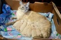 7匹の子猫を産んだ母猫