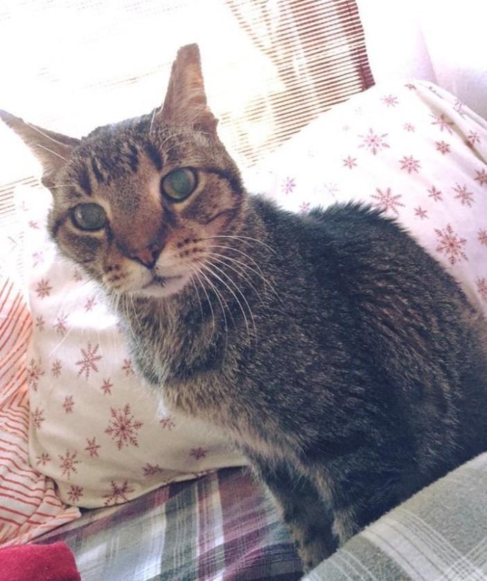 16歳の猫