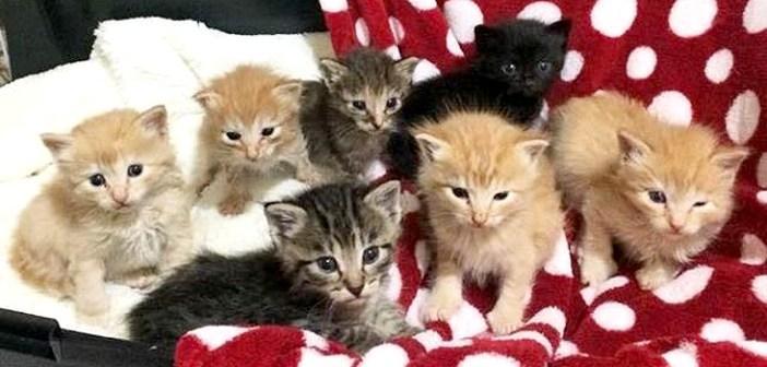 7匹の子猫