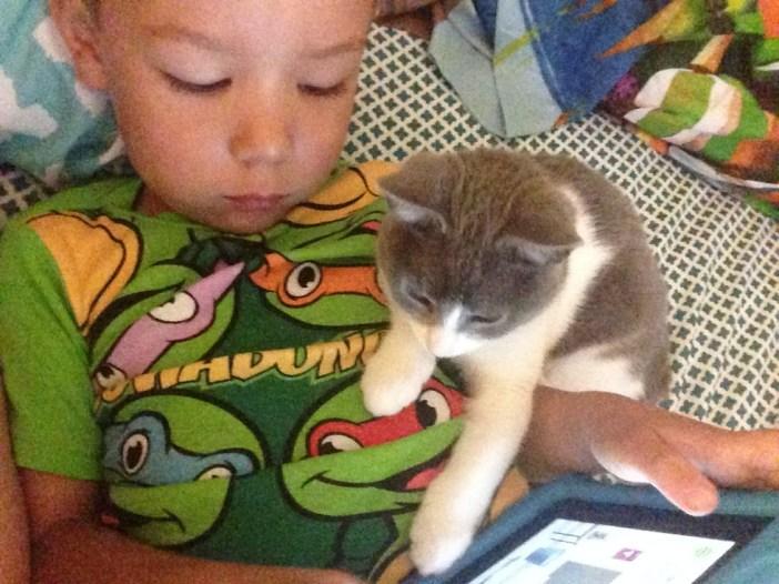 いっしょにタブレットをいじる少年と子猫