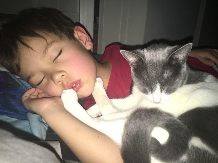 いっしょに眠る男の子と子猫