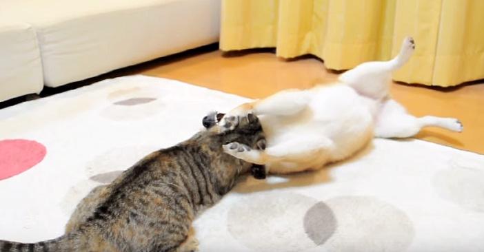 遊び続ける猫と犬