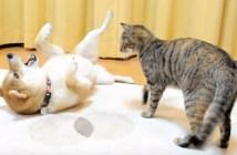 いっしょに遊ぶ犬と猫