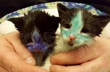 インクが全身に塗られた猫