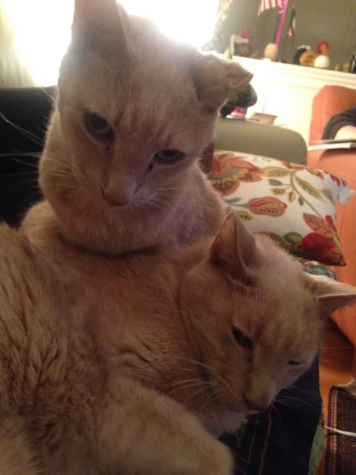 まったりする2匹の猫