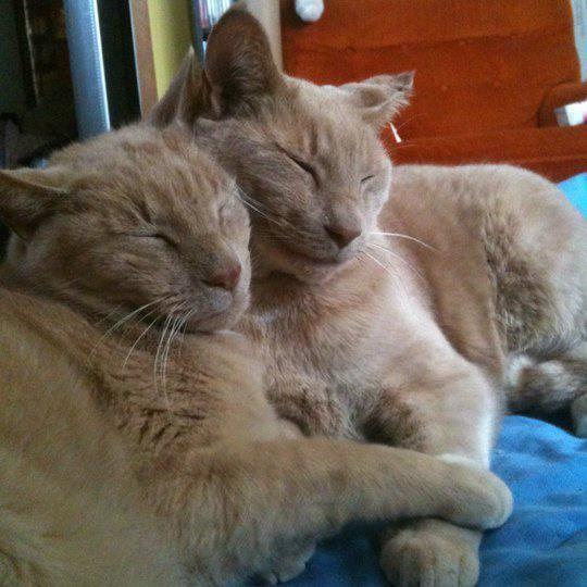 いつもいっしょの二匹の猫