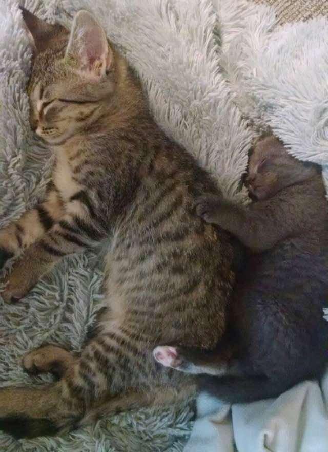 お姉ちゃんの背中にくっつく子猫