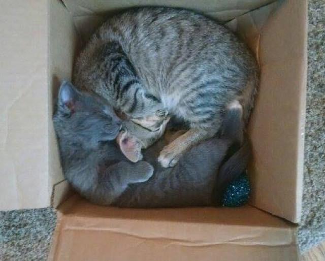 いっしょの箱に入る子猫