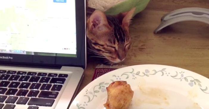 チキンを寝たふりしながら盗もうとする猫