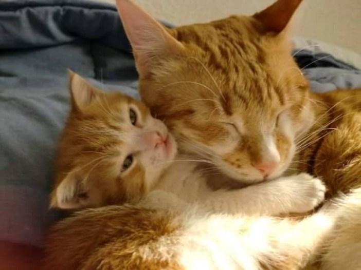 子猫を育てる