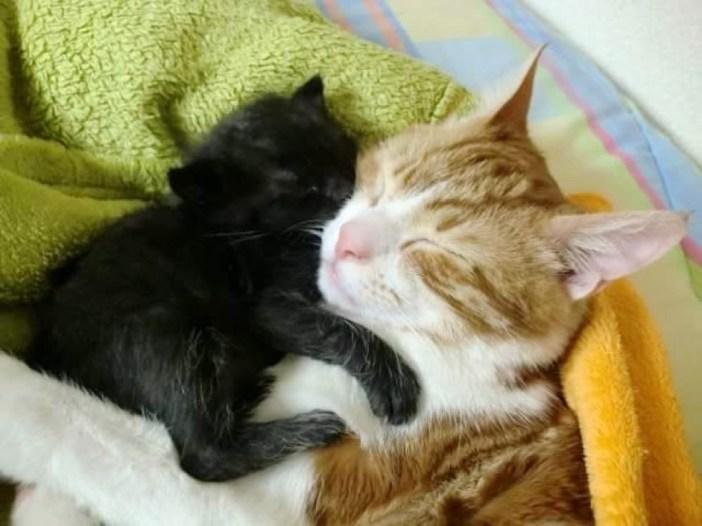 いっしょに眠る猫