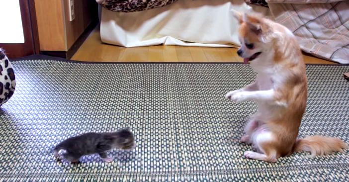 攻める子猫